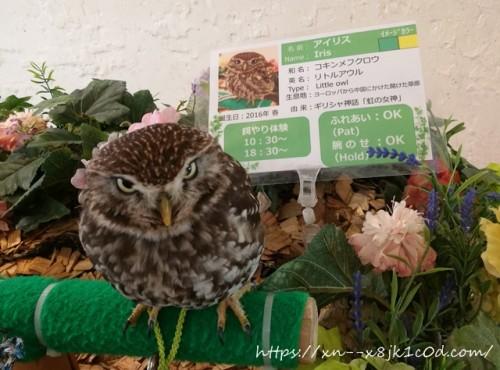 フクロウのお庭の注意事項
